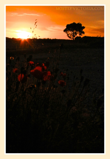 Salhouse Norfolk England Poppy Sunset © MostlyVictoria
