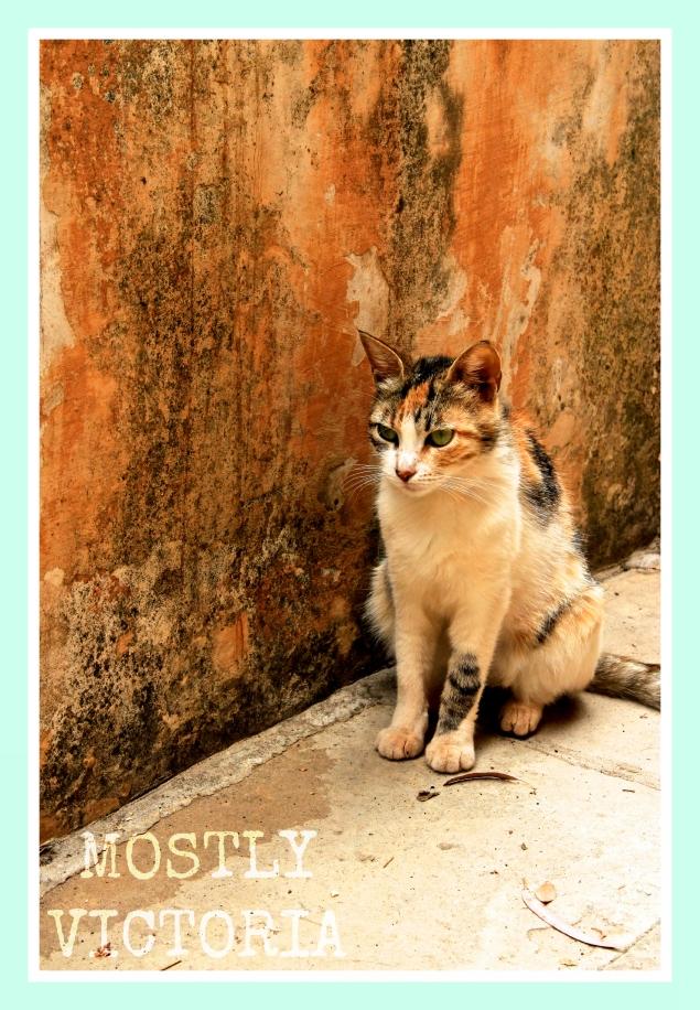 Cat Gouverneto Monastery Crete Greece MostlyVictoria ©
