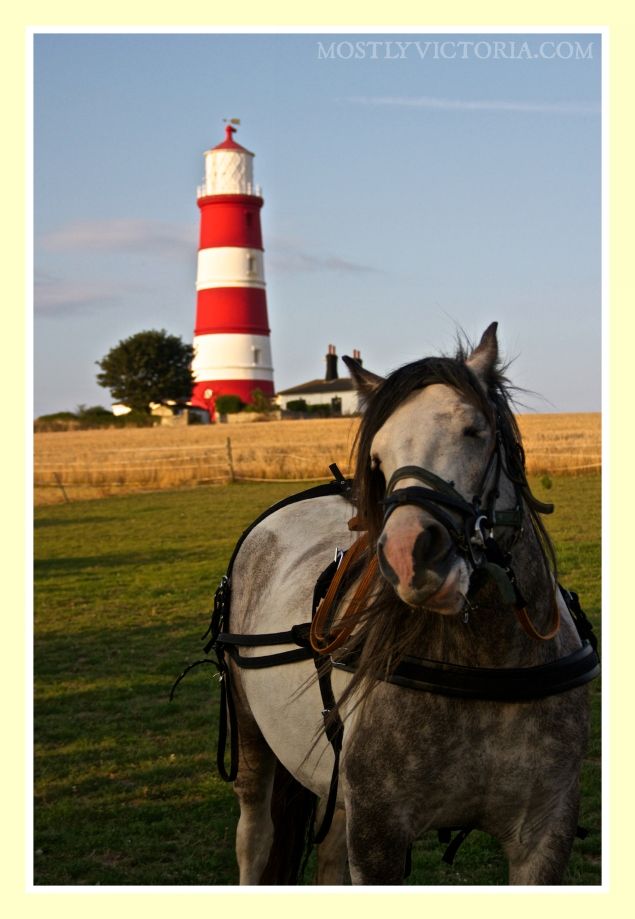 Happisburgh Horse Frankie MostlyVictoria ©